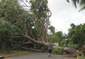 omgevallenboom